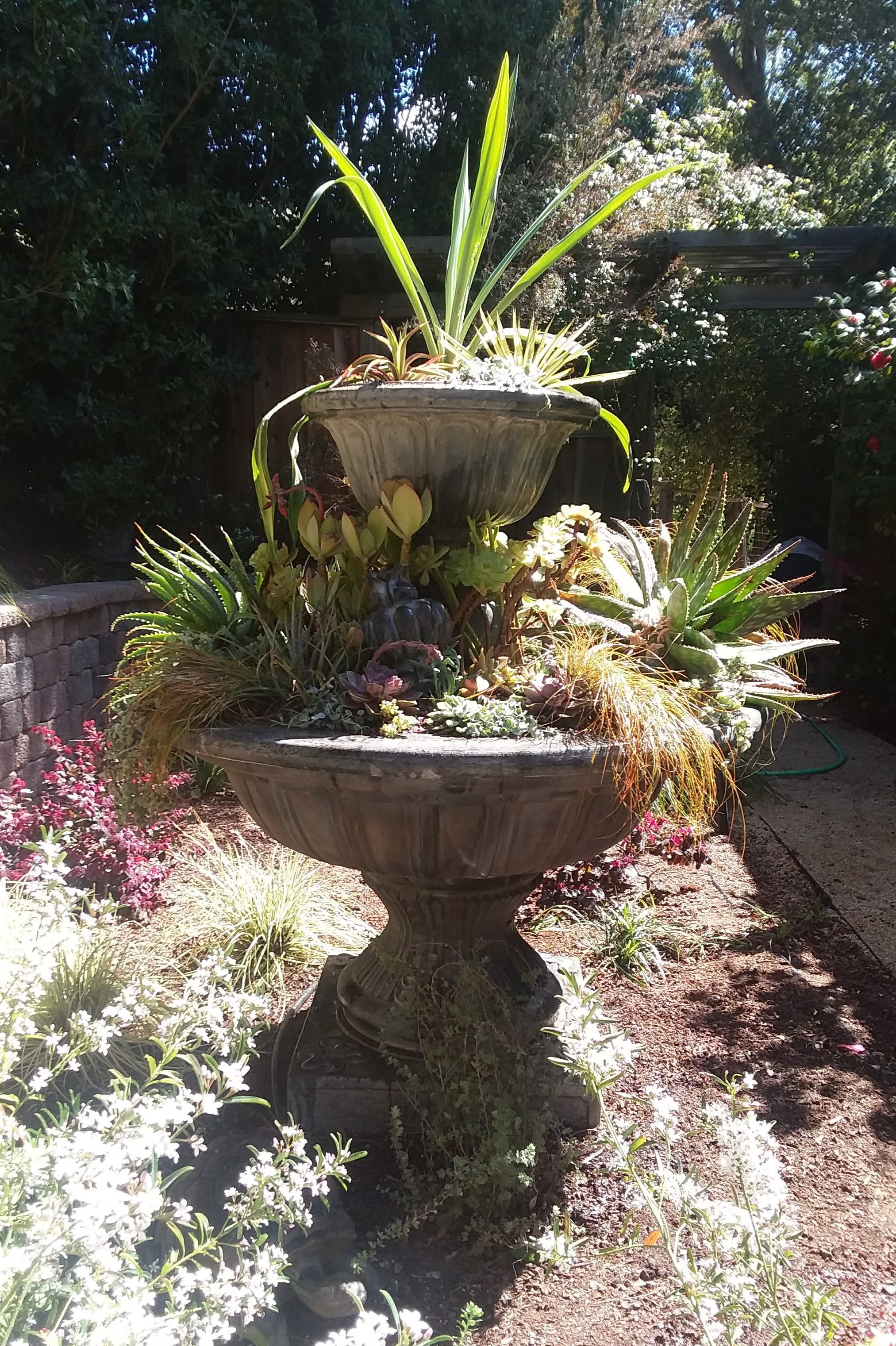 Amason's succulent fountain on Tues., April 9, 2019-2.jpg