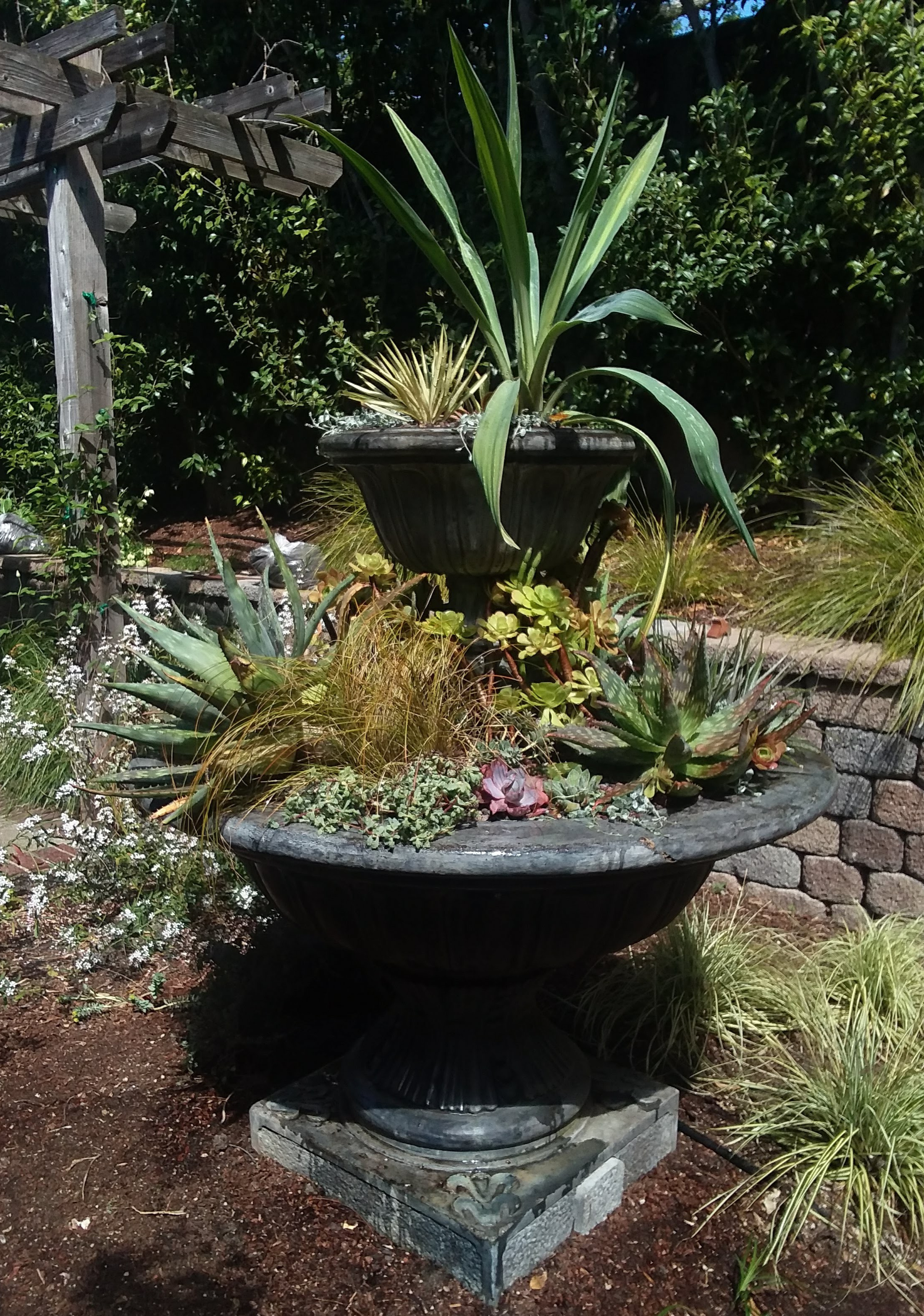 Amason's succulent fountain on Tues., April 9, 2019-1.jpg