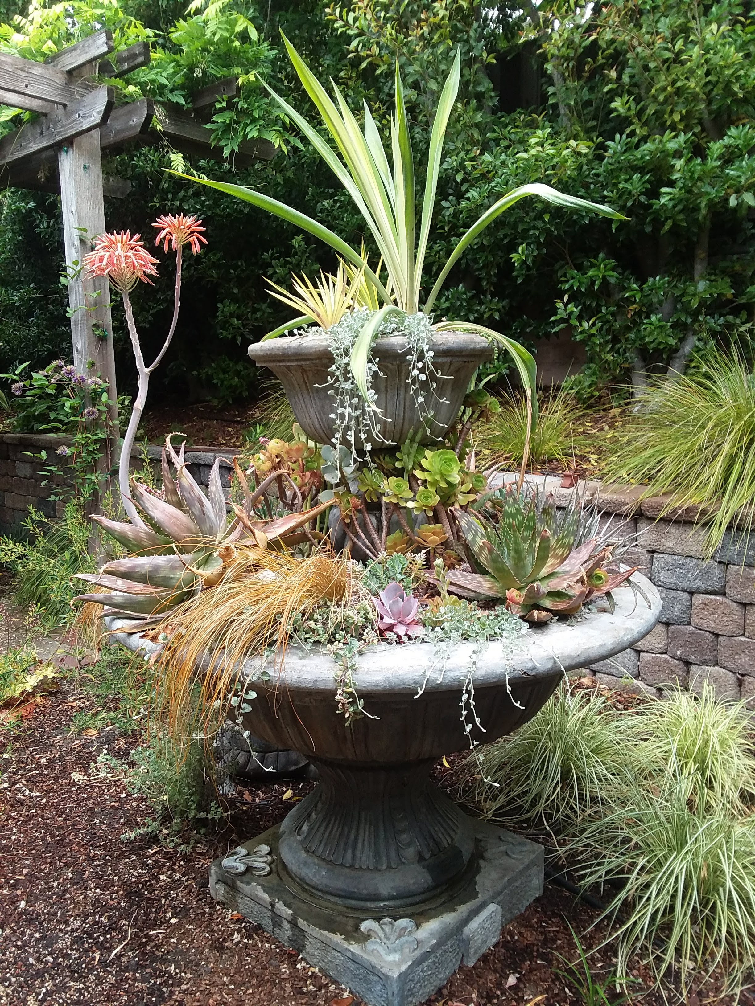 Amason's Succulent Fountain on Fri., May 17, 2019-1.jpg