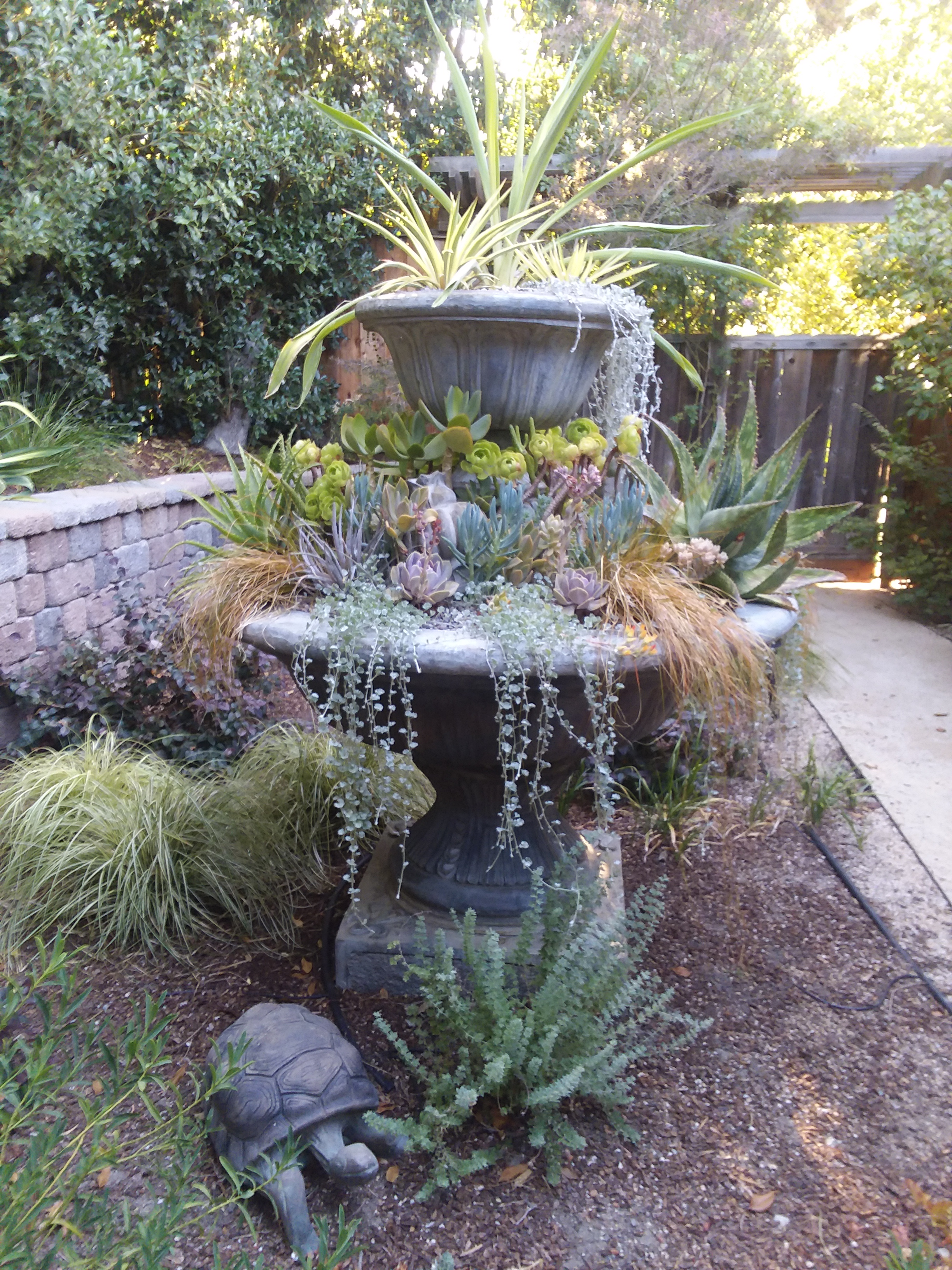 Amason's Succulent Fountain on Tues., July 23, 2019 -1.jpg