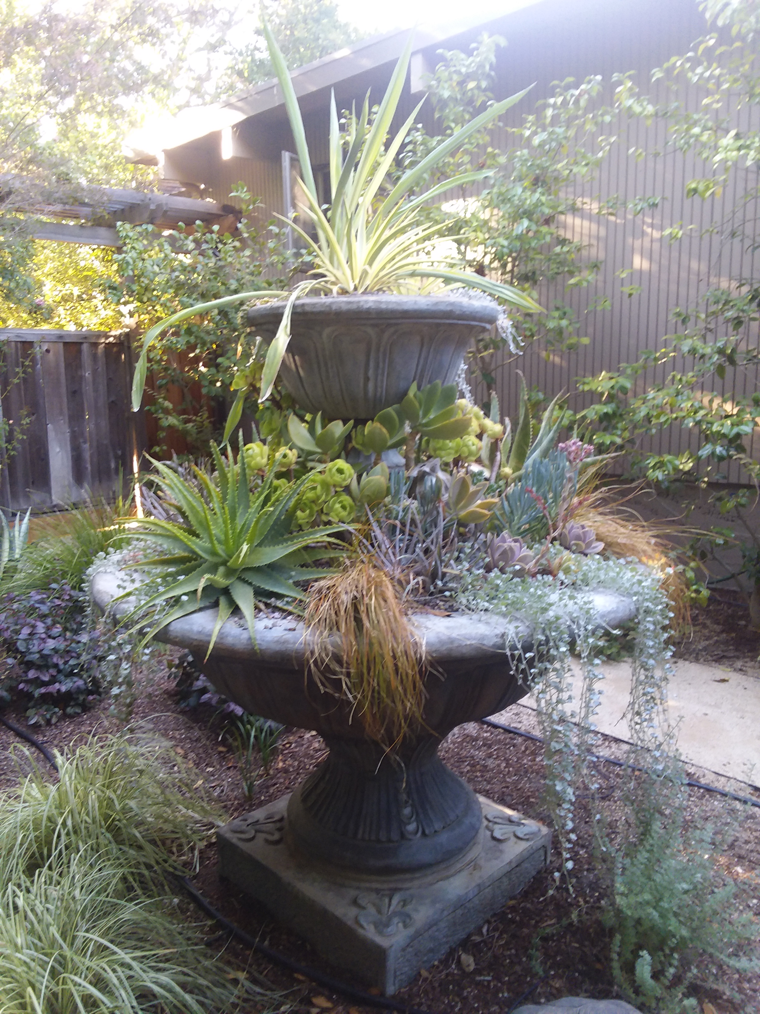Amason's Succulent Fountain on Tues., July 23, 2019 -2.jpg