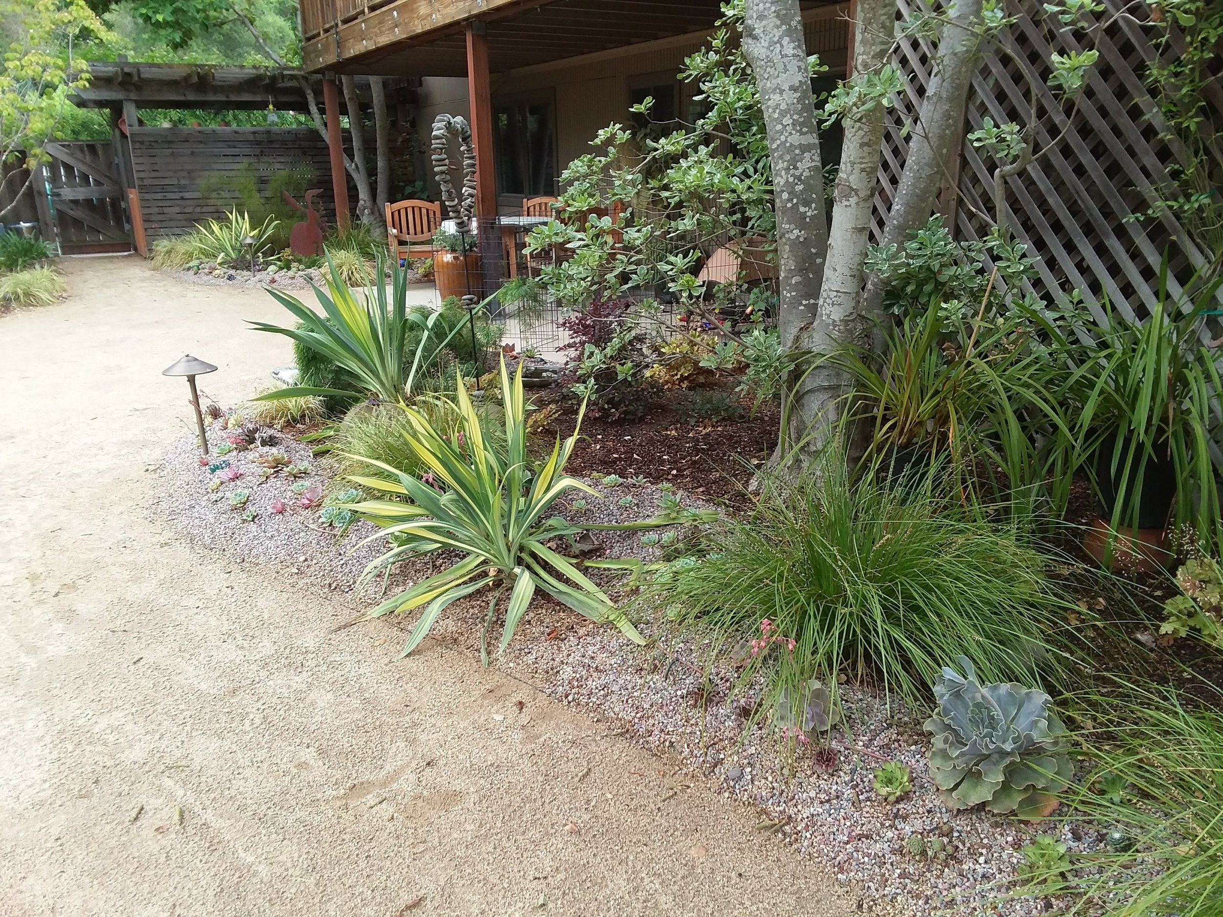 Amason's Back Right mini succulent berm Fri., May 17, 2019-1.jpg