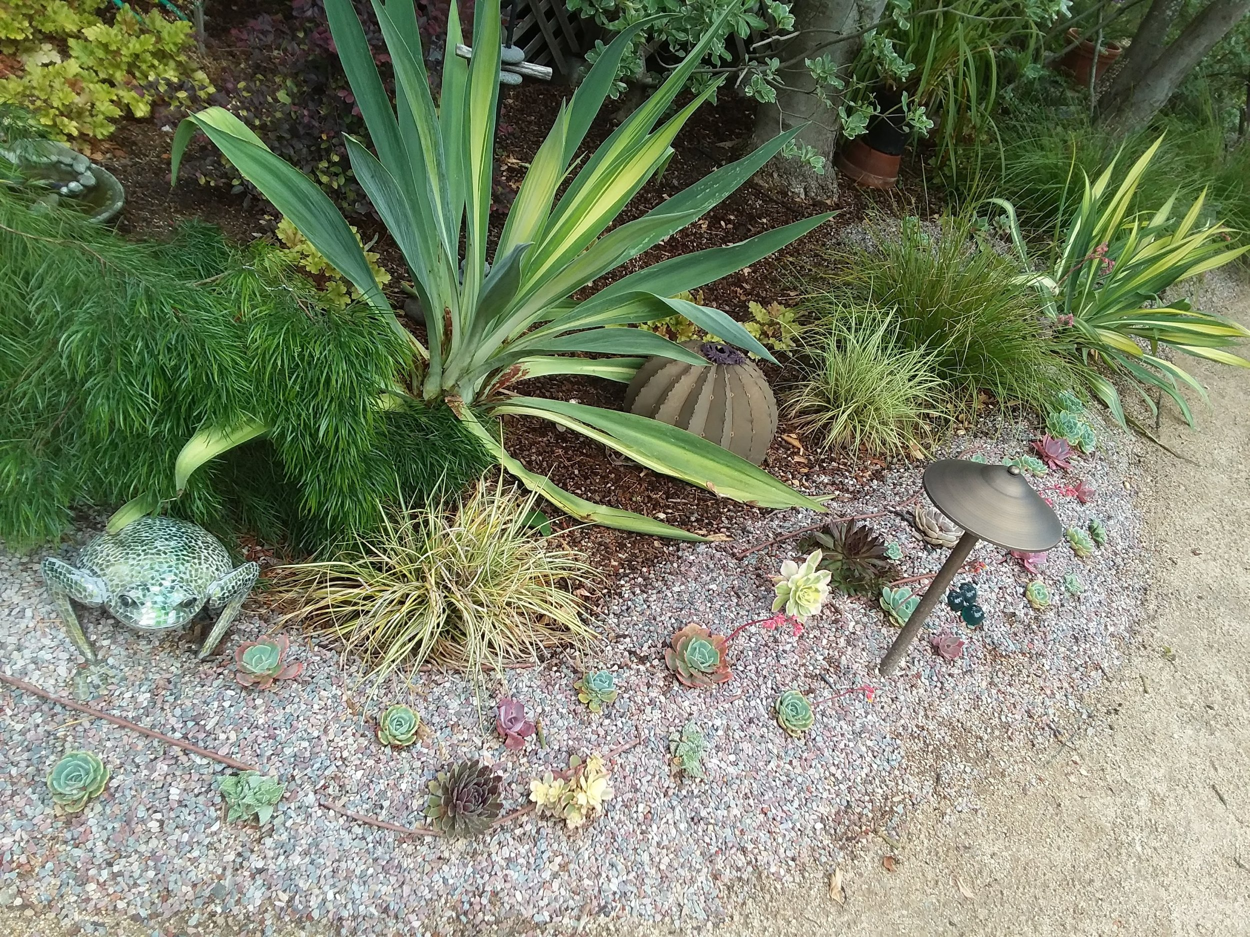 Amason's back right mini succulent berm Fri., May 17, 2019.jpg