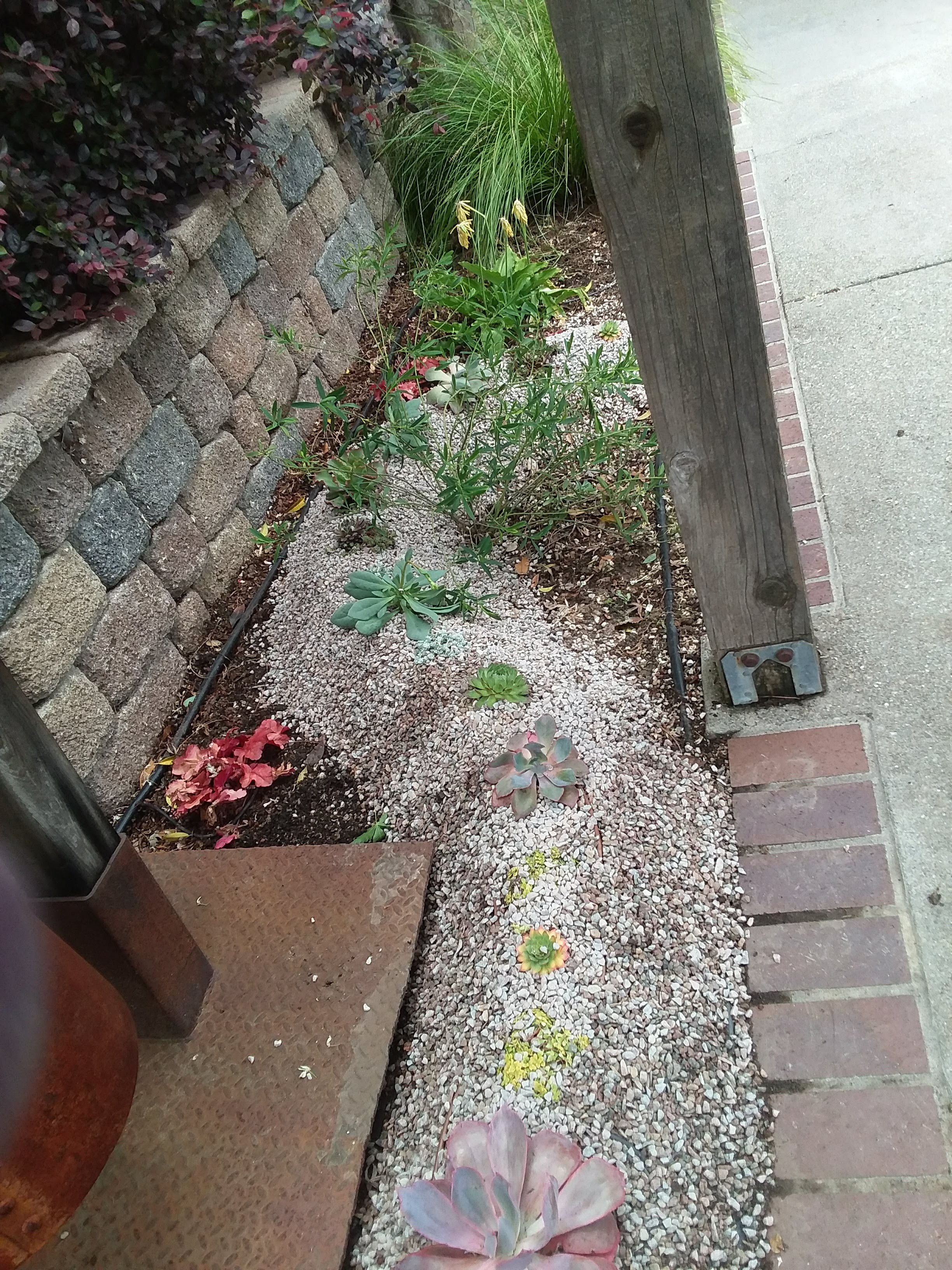 Amason's Front mini succulent berm to the Right of Big Bell on Fri., May 17, 2019.jpg
