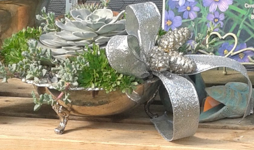 Succulents in Silver-3.jpg