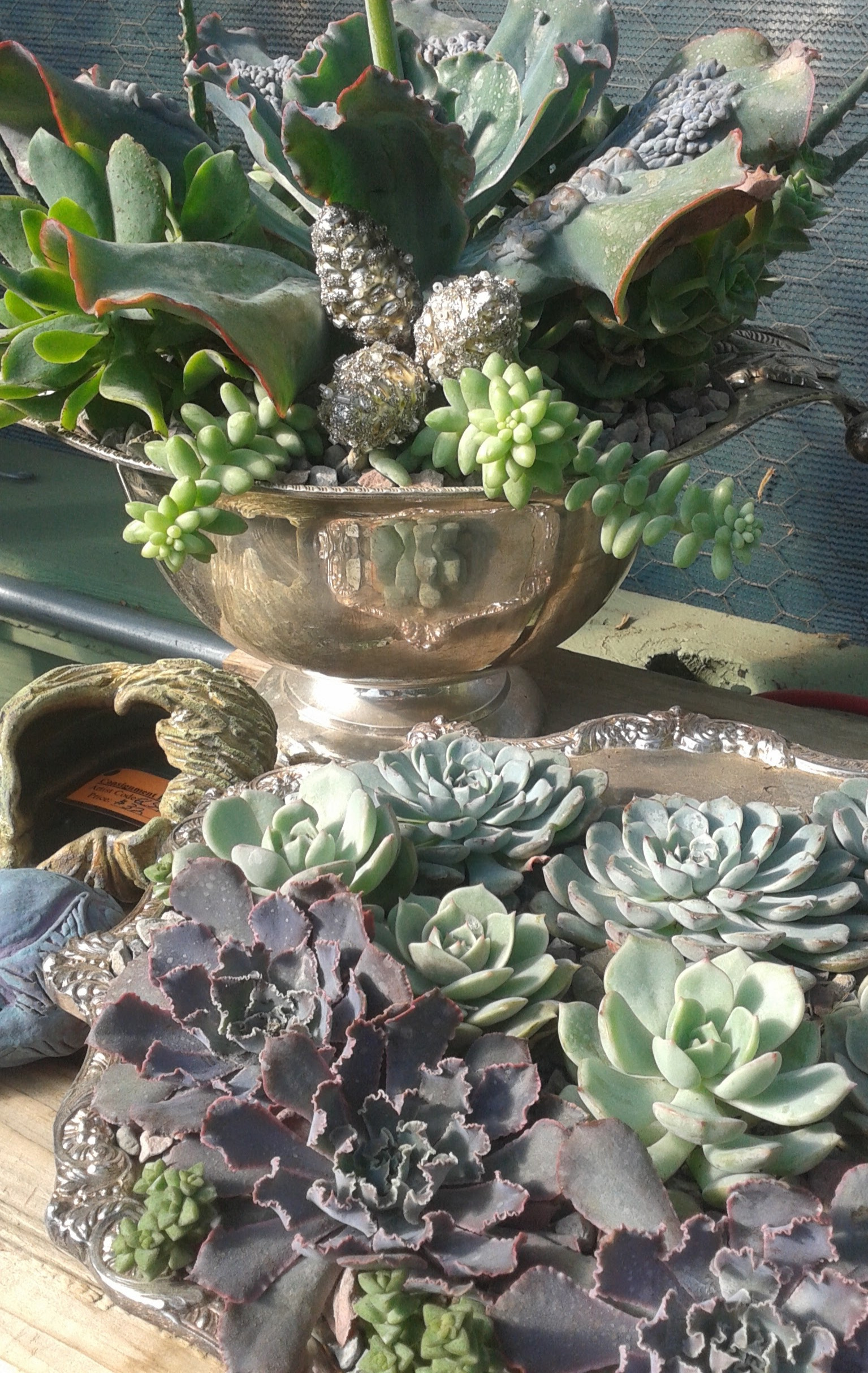Succulents+in+Silver-1.jpg