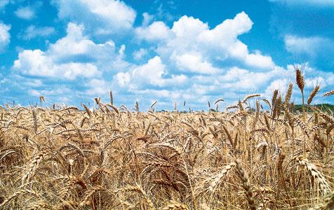 Grain sky img.jpg