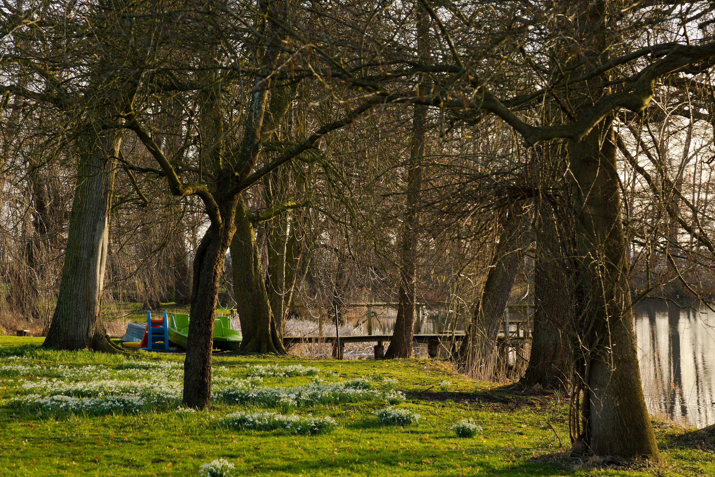 Frühling am Langensee