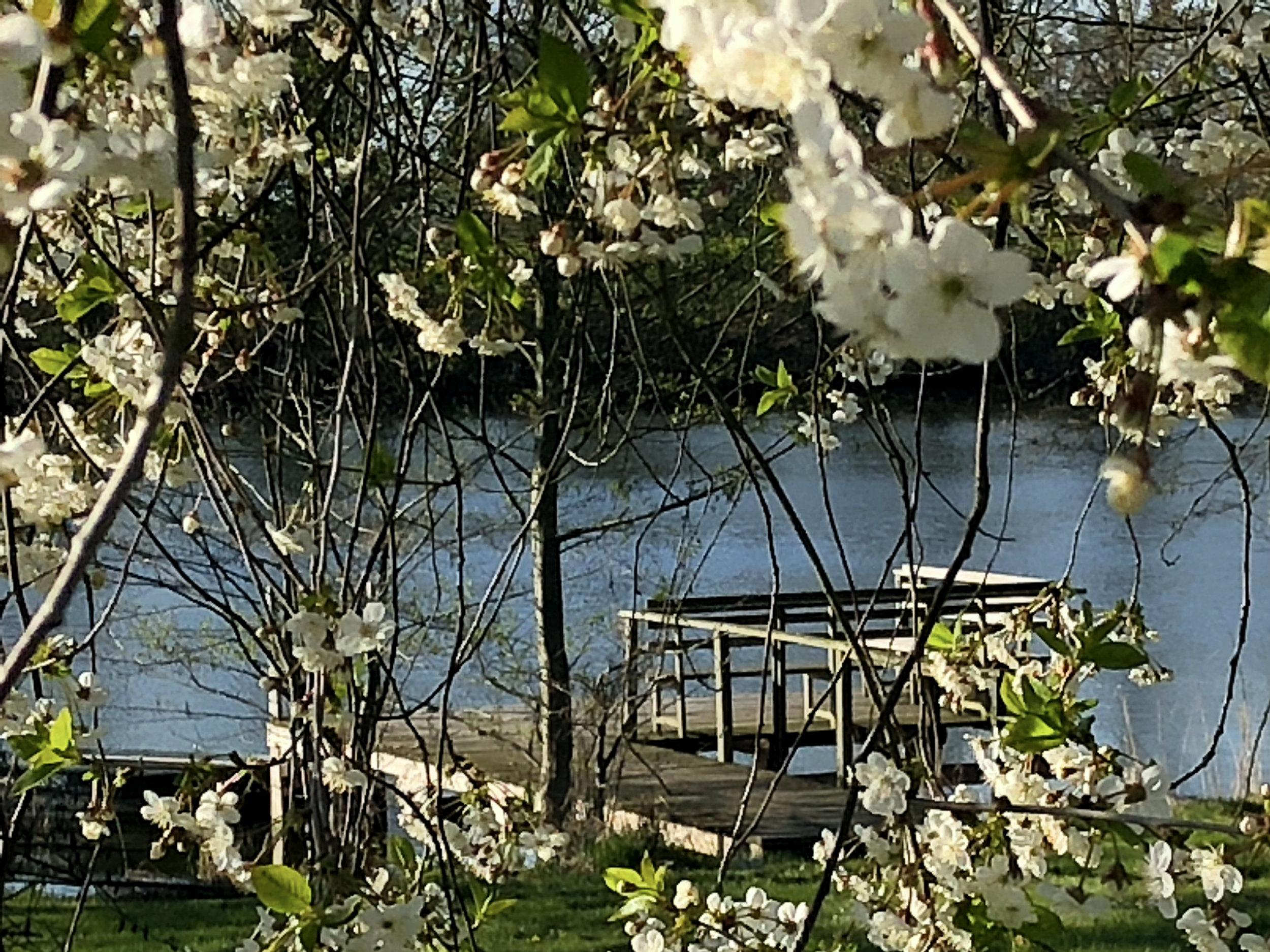 Gästesteg im Frühling