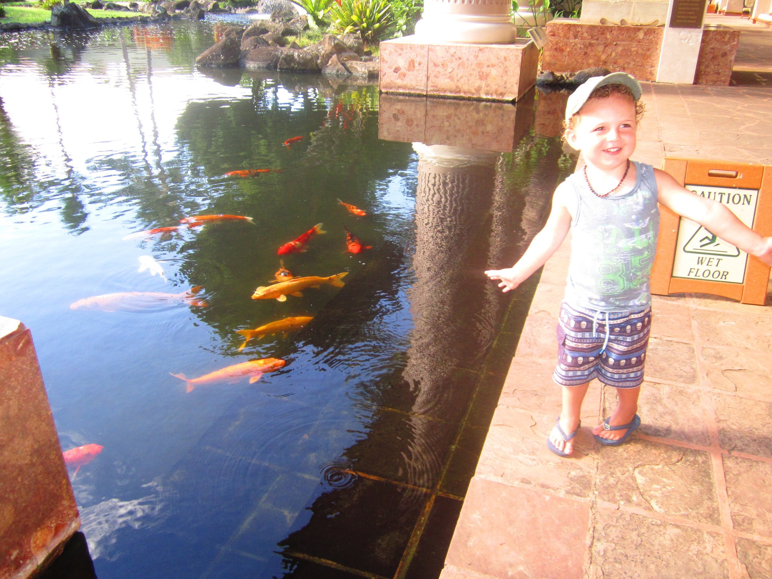 Feeding the Koi their breakfast, before breakfast