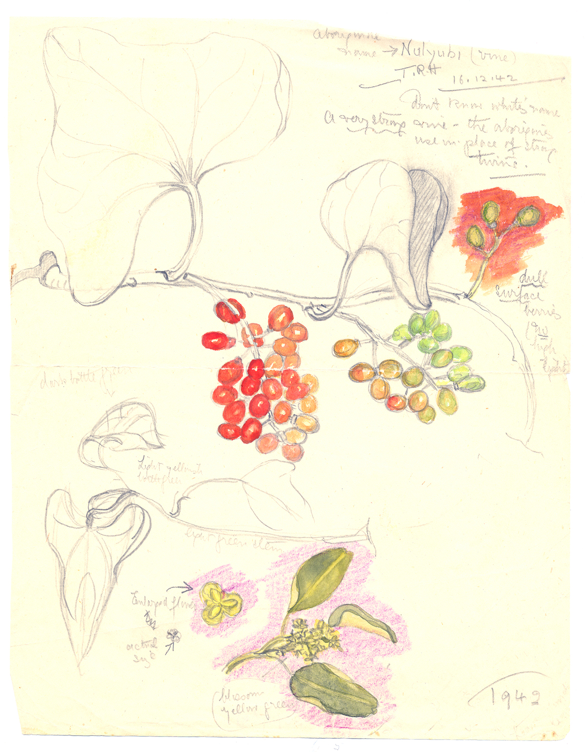 Olive Pink,  Thompsons Rock Hole , watercolour and pencil on paper, 1942, Olive Pink Collection, University of Tasmania