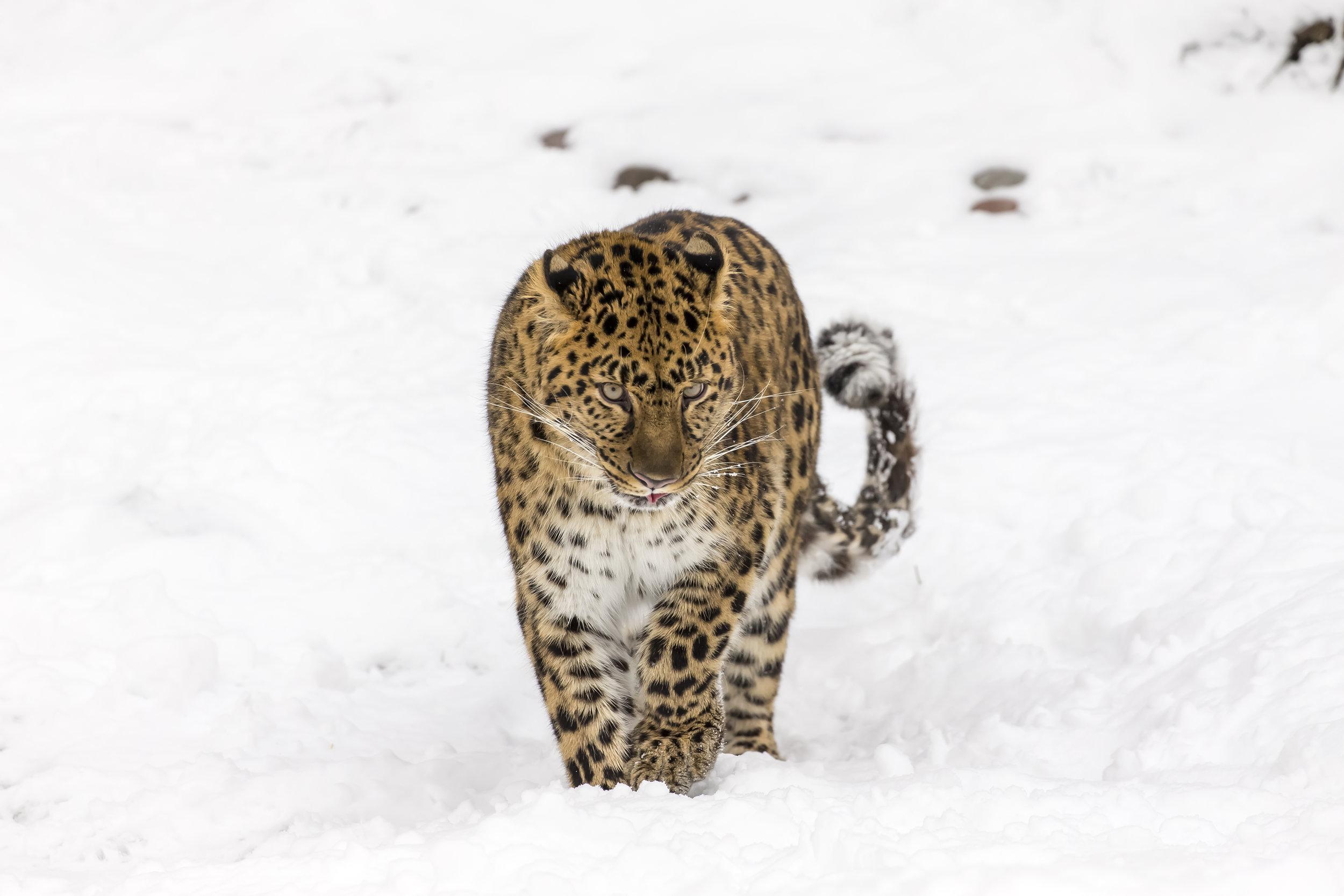 (Image Shutterstock)