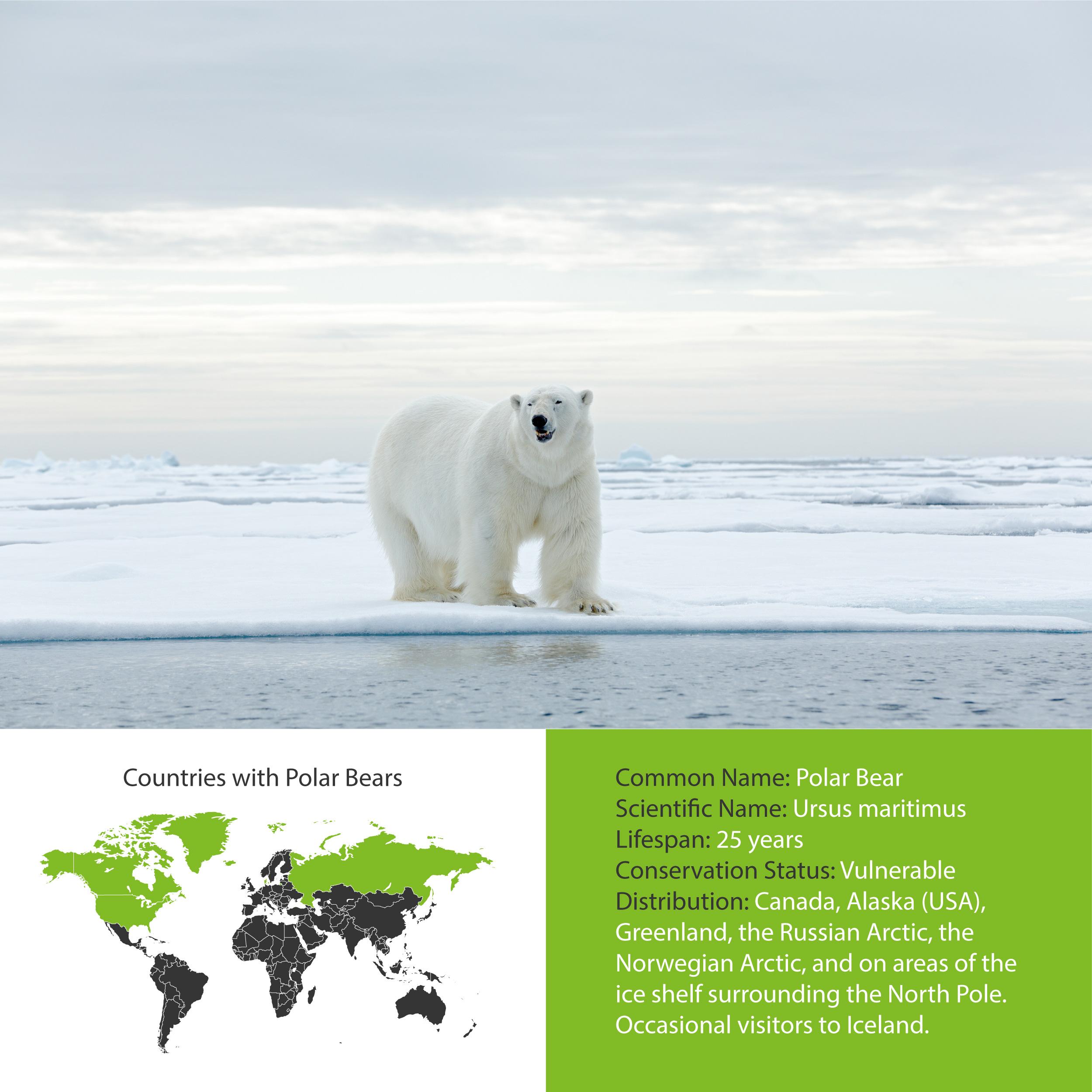 Polar Bear Distribution