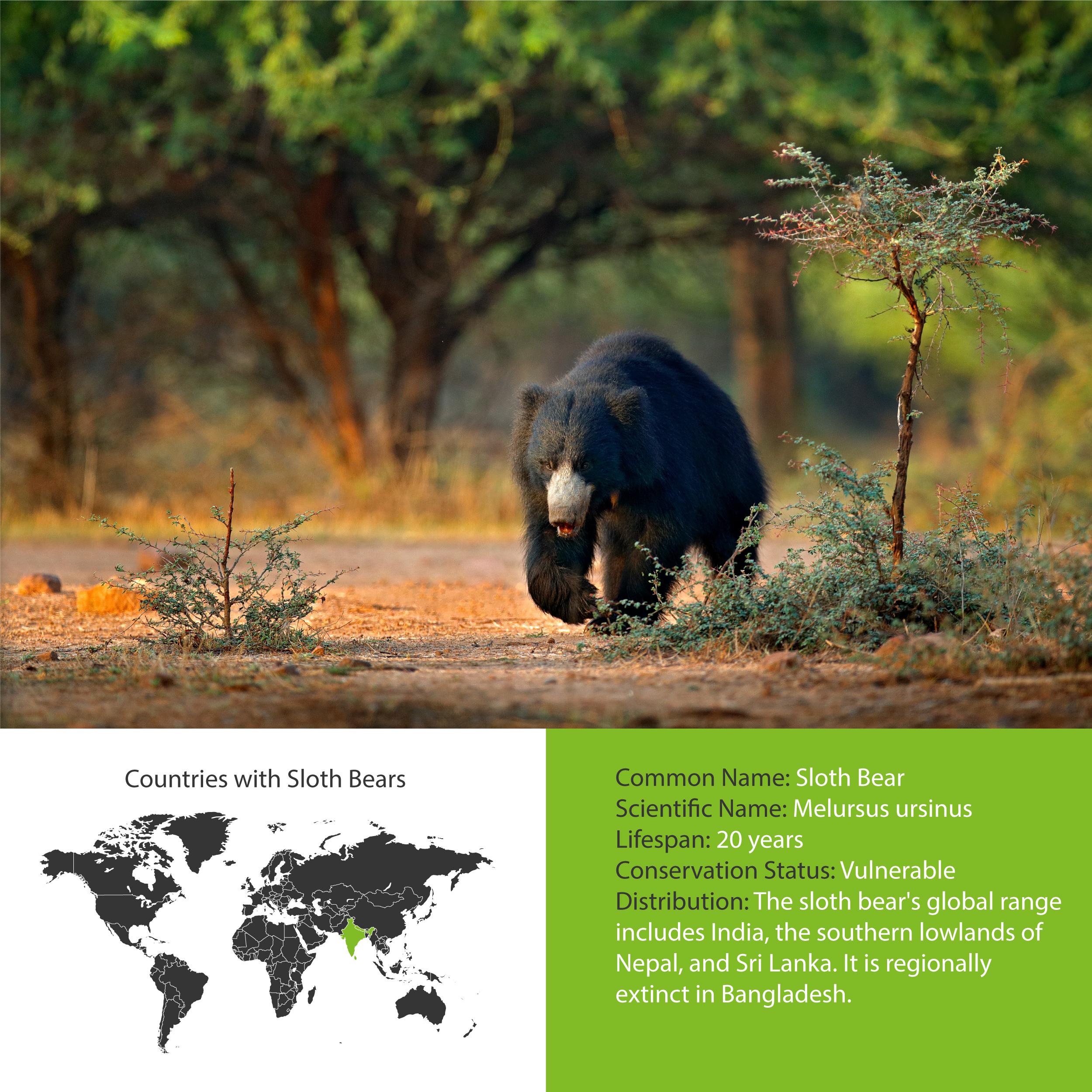 Sloth Bear Distribution