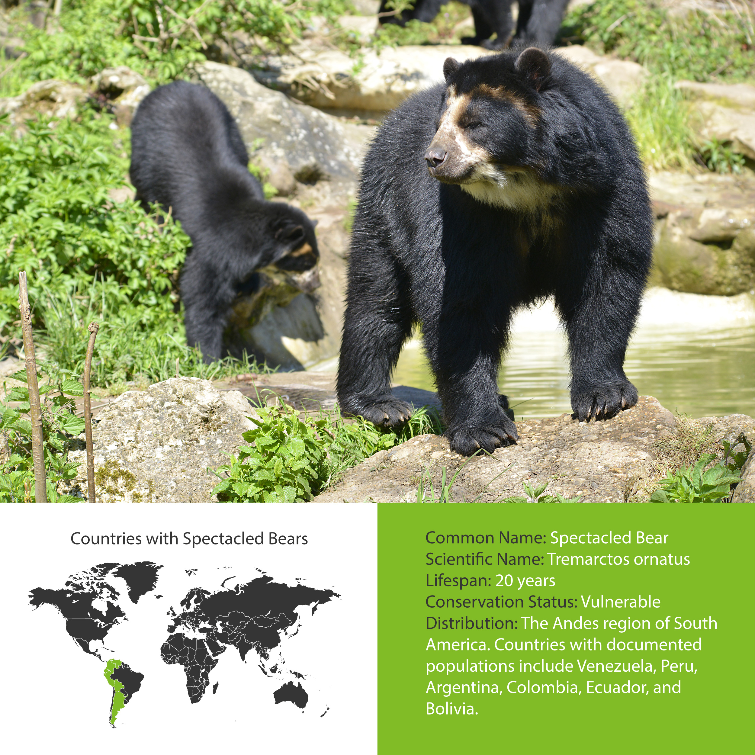 Spectacled Bear Distribution