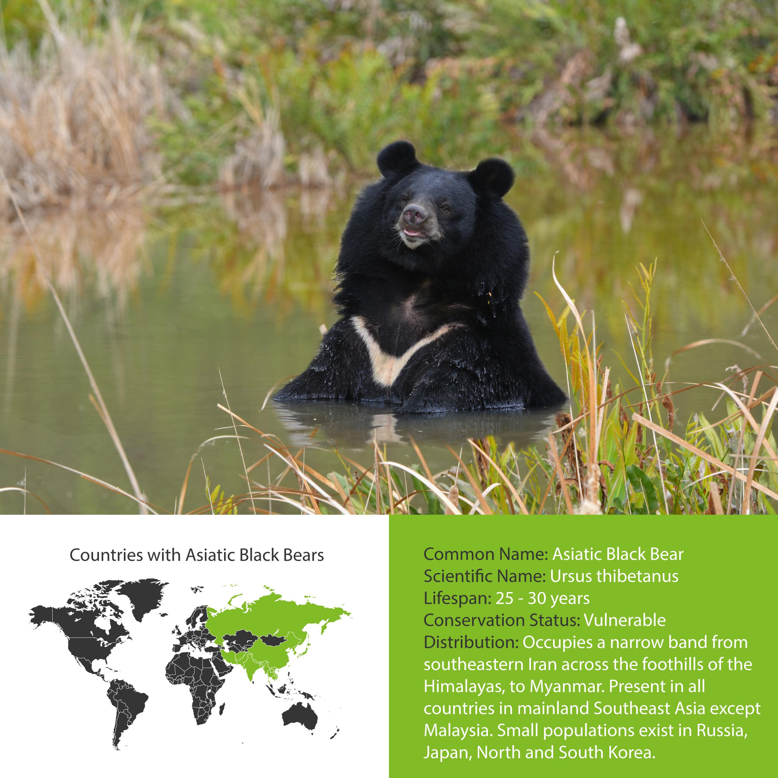 Asiatic Black Bear Distribution