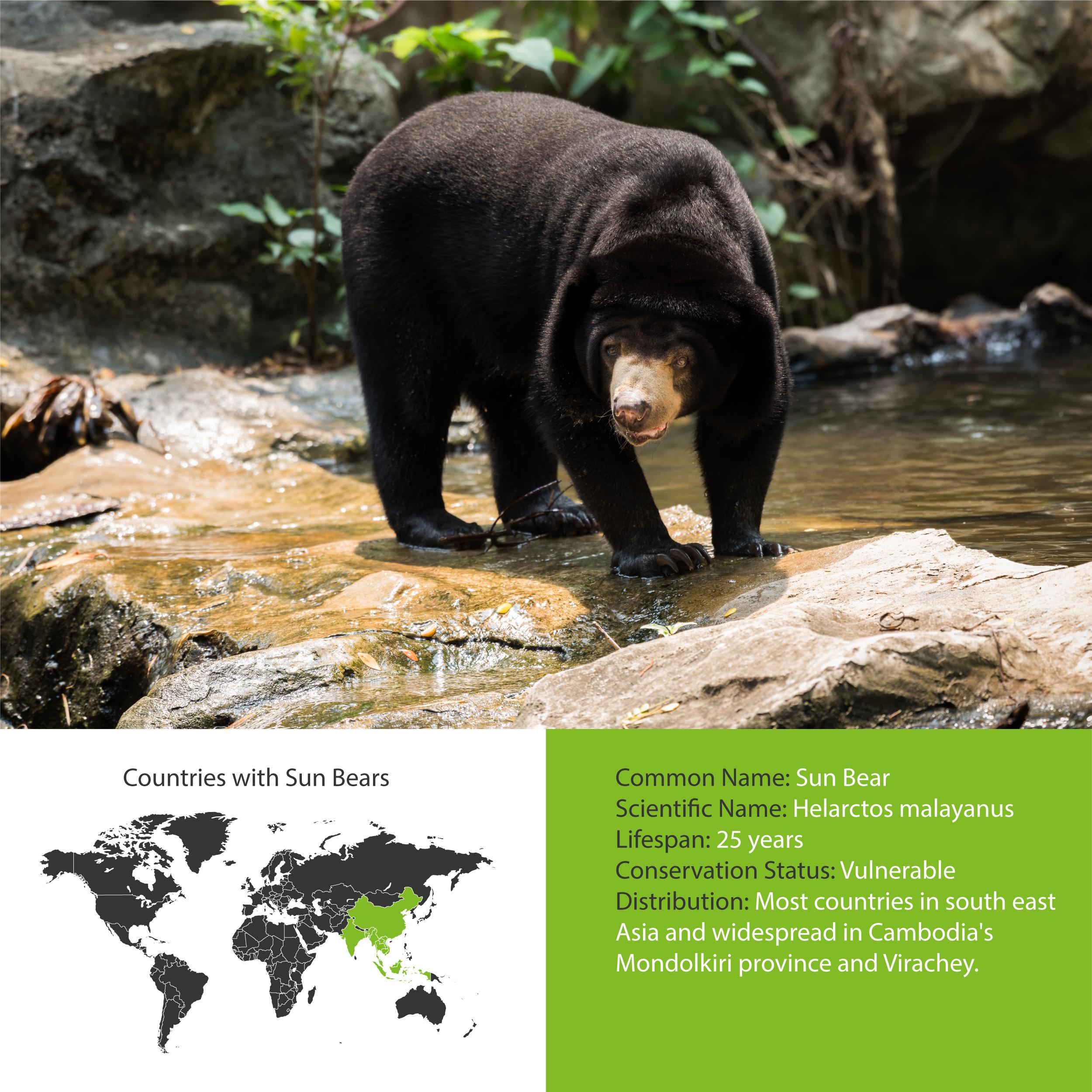 Sun Bear Distribution