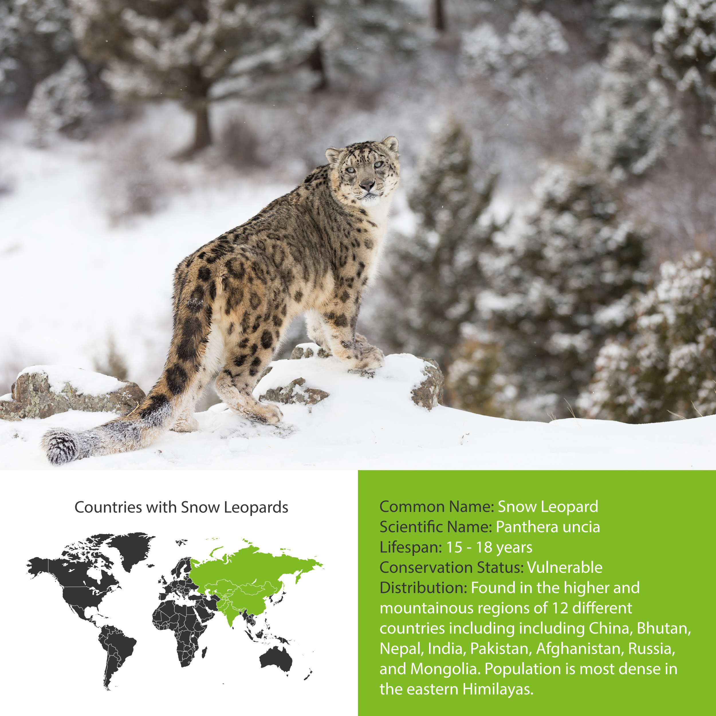 Snow Leopard Distribution