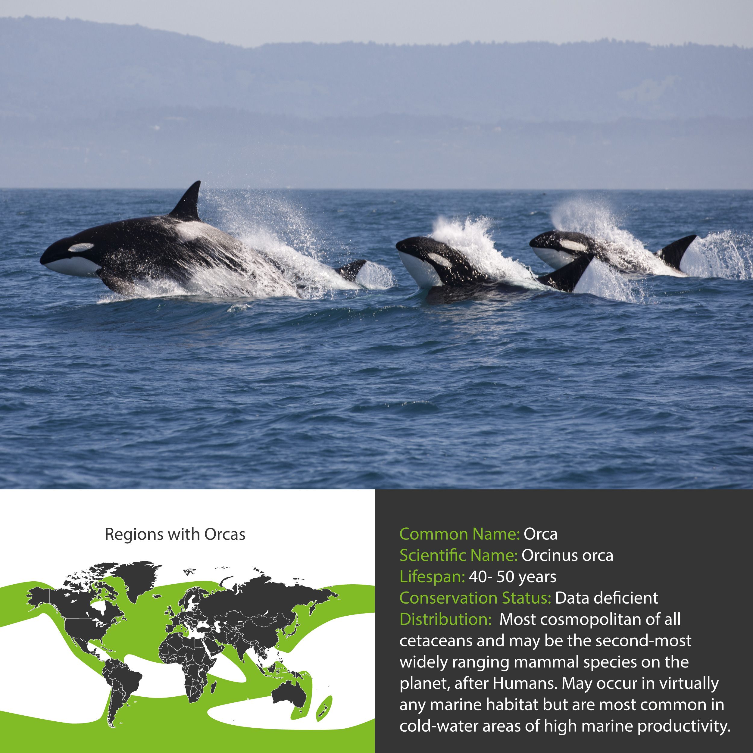 Orca Distribution