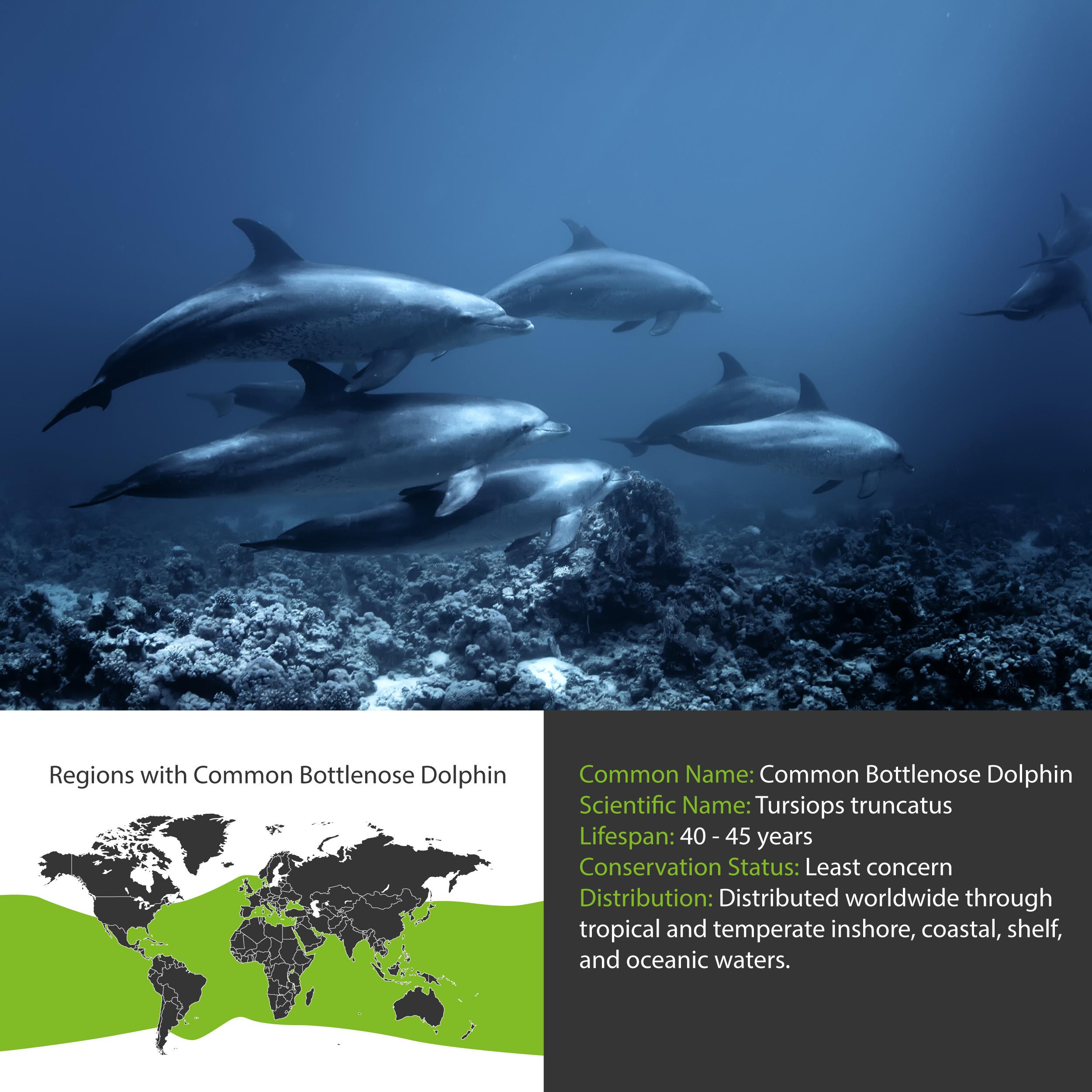 Common Bottlenose Dolphin Distribution