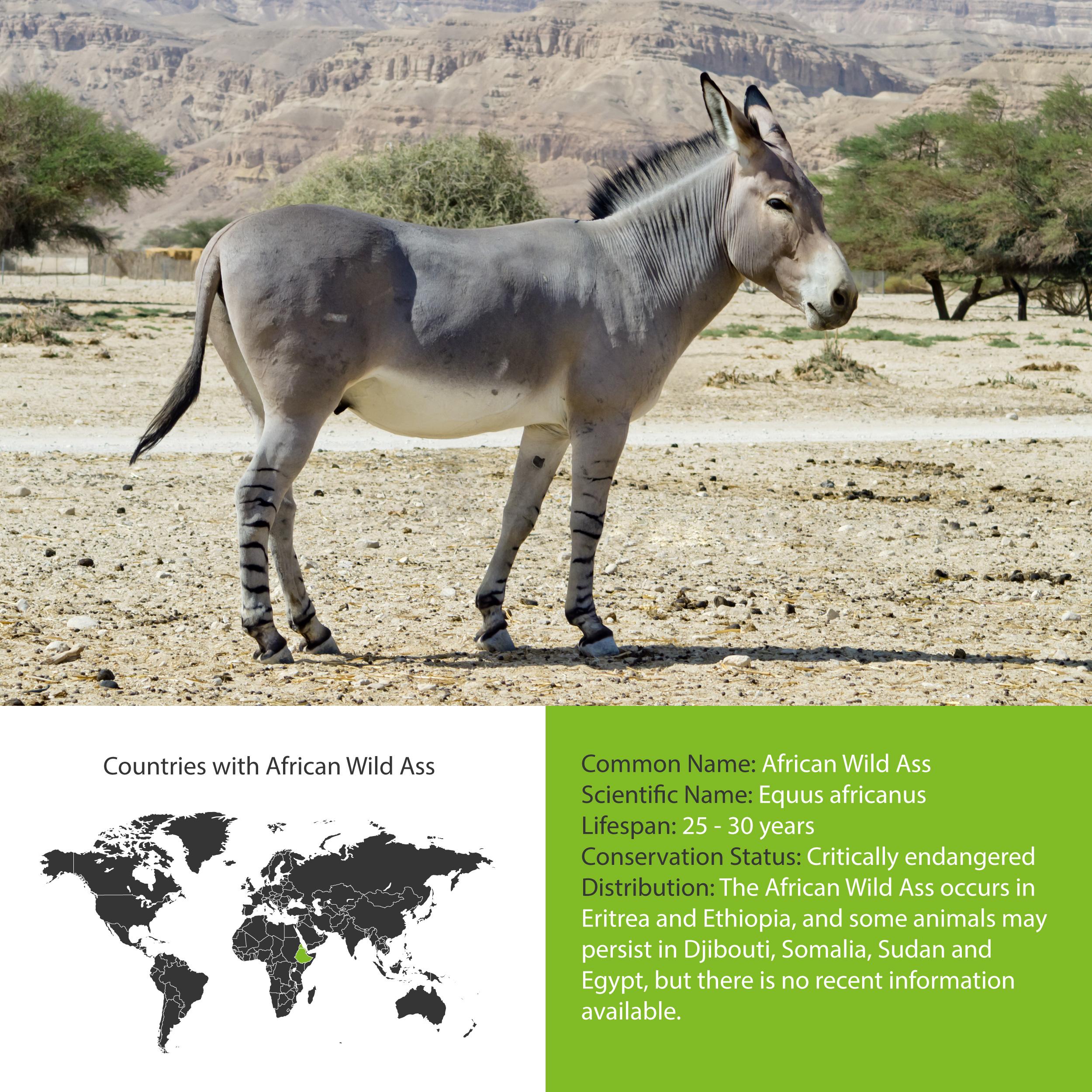 African Wild Ass Distribution