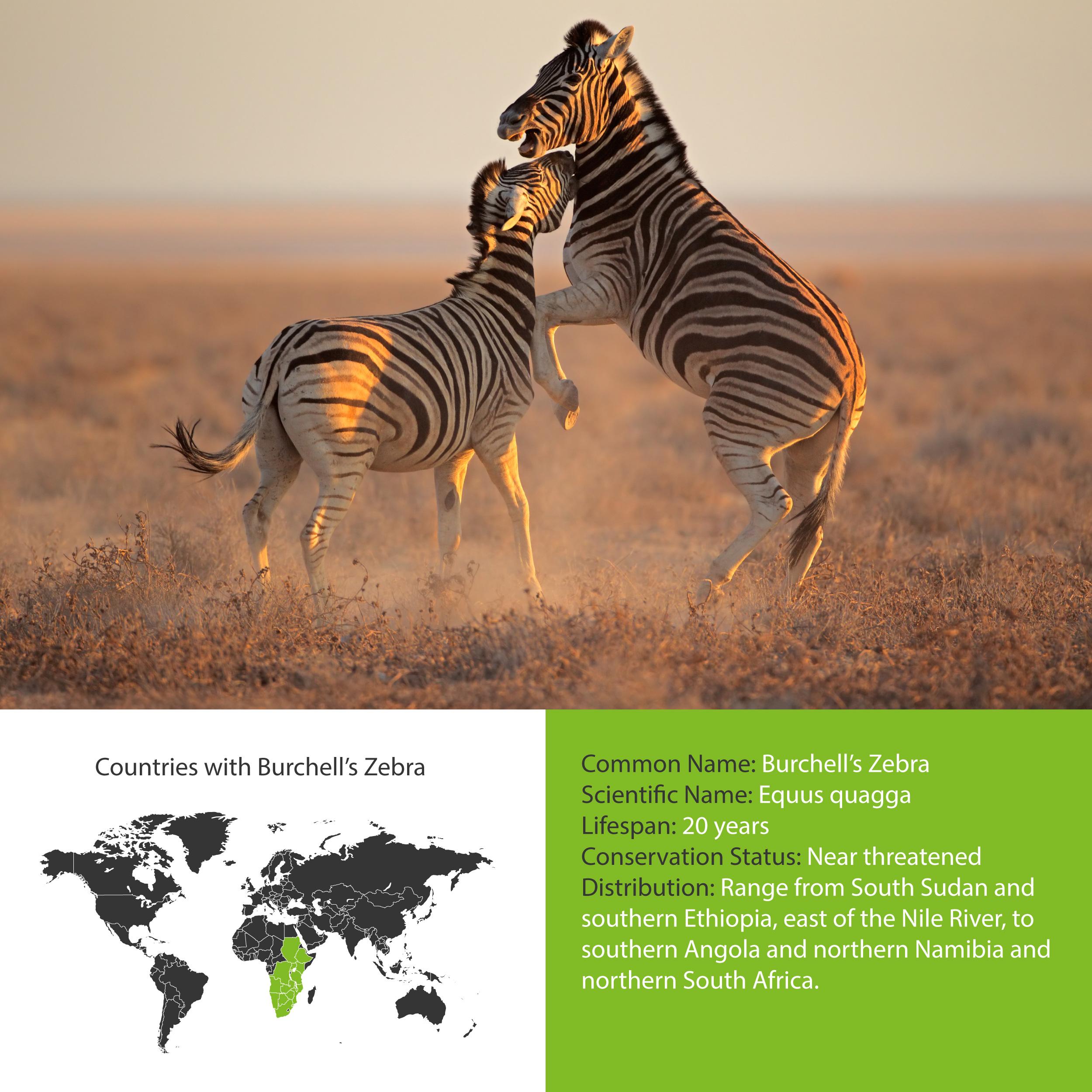 Burchell's Zebra Distribution