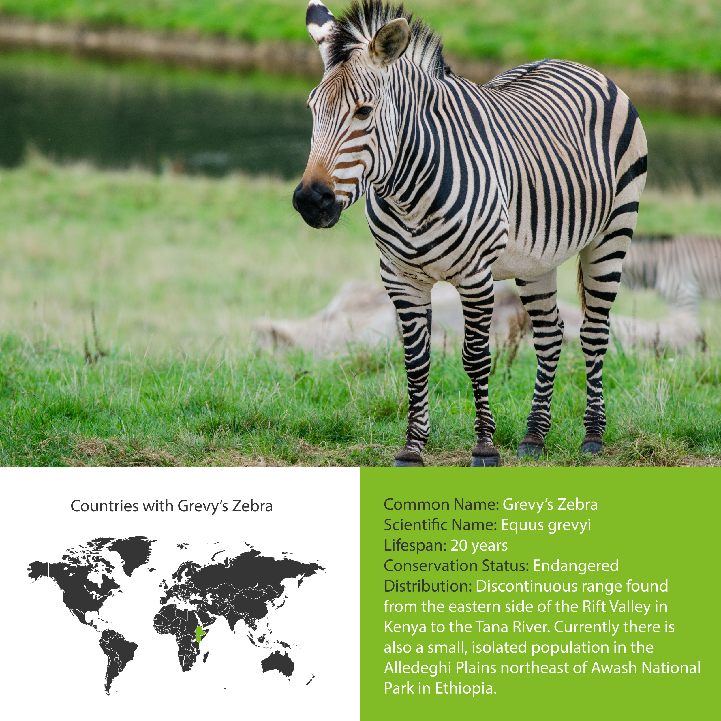 Grevy's Zebra Distribution