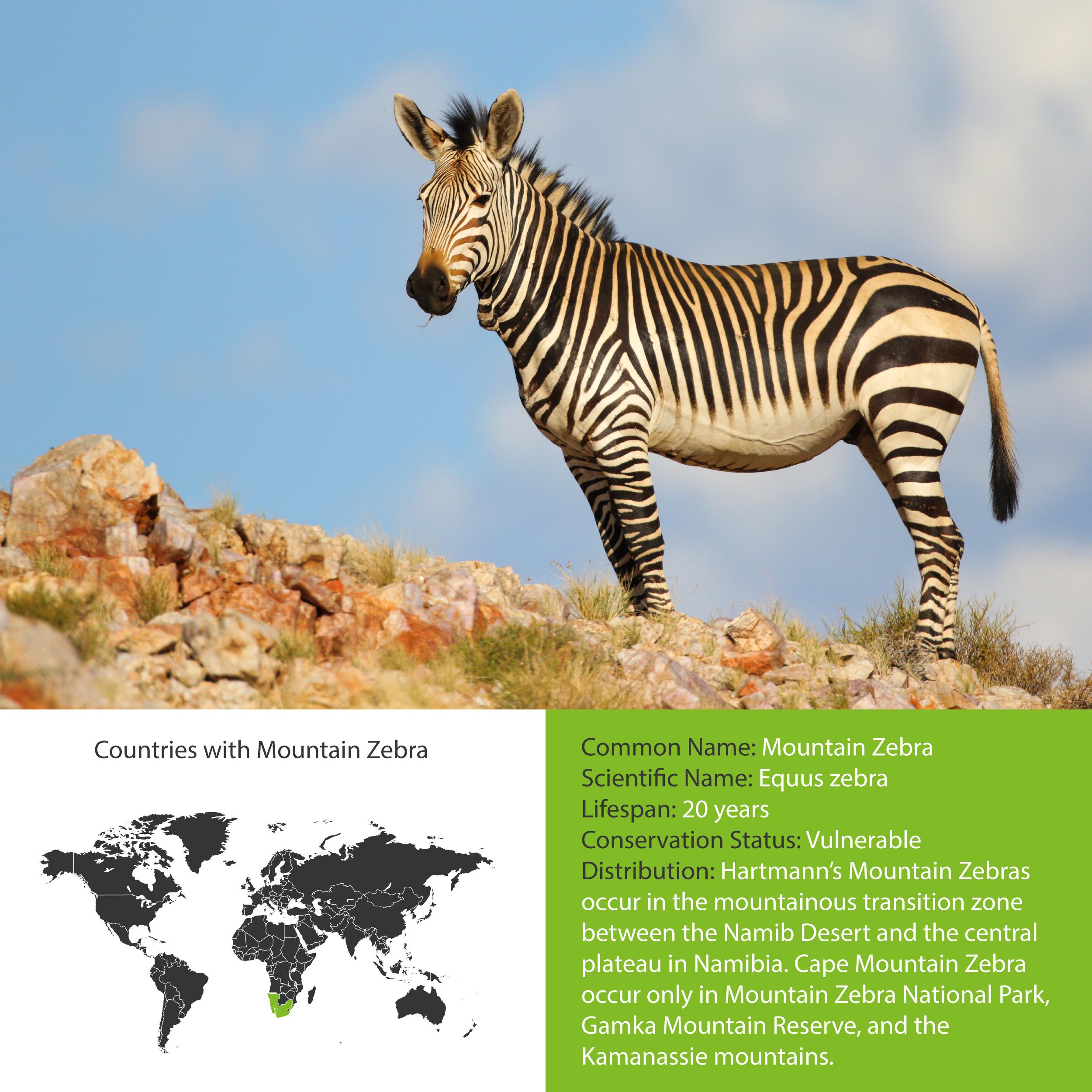 Mountain Zebra Distribution