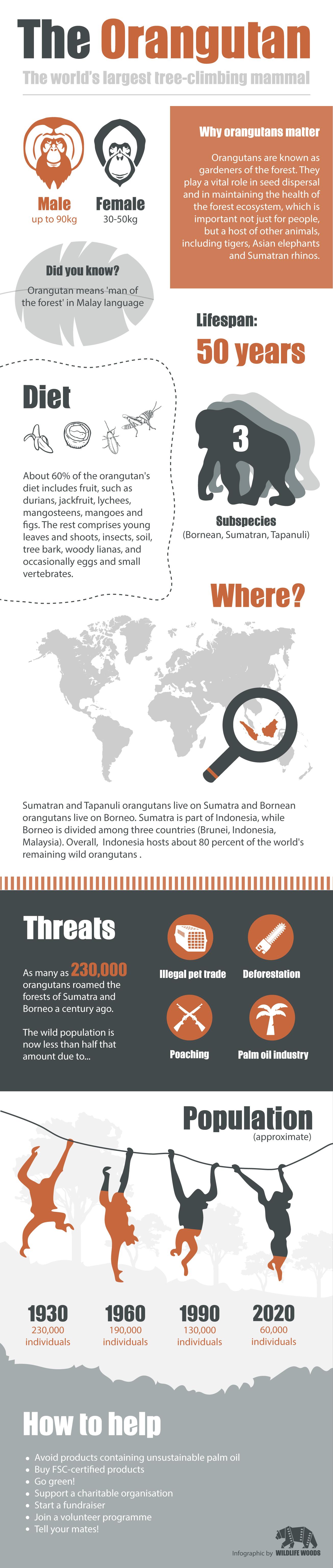 Orangutan-Infographic.jpg
