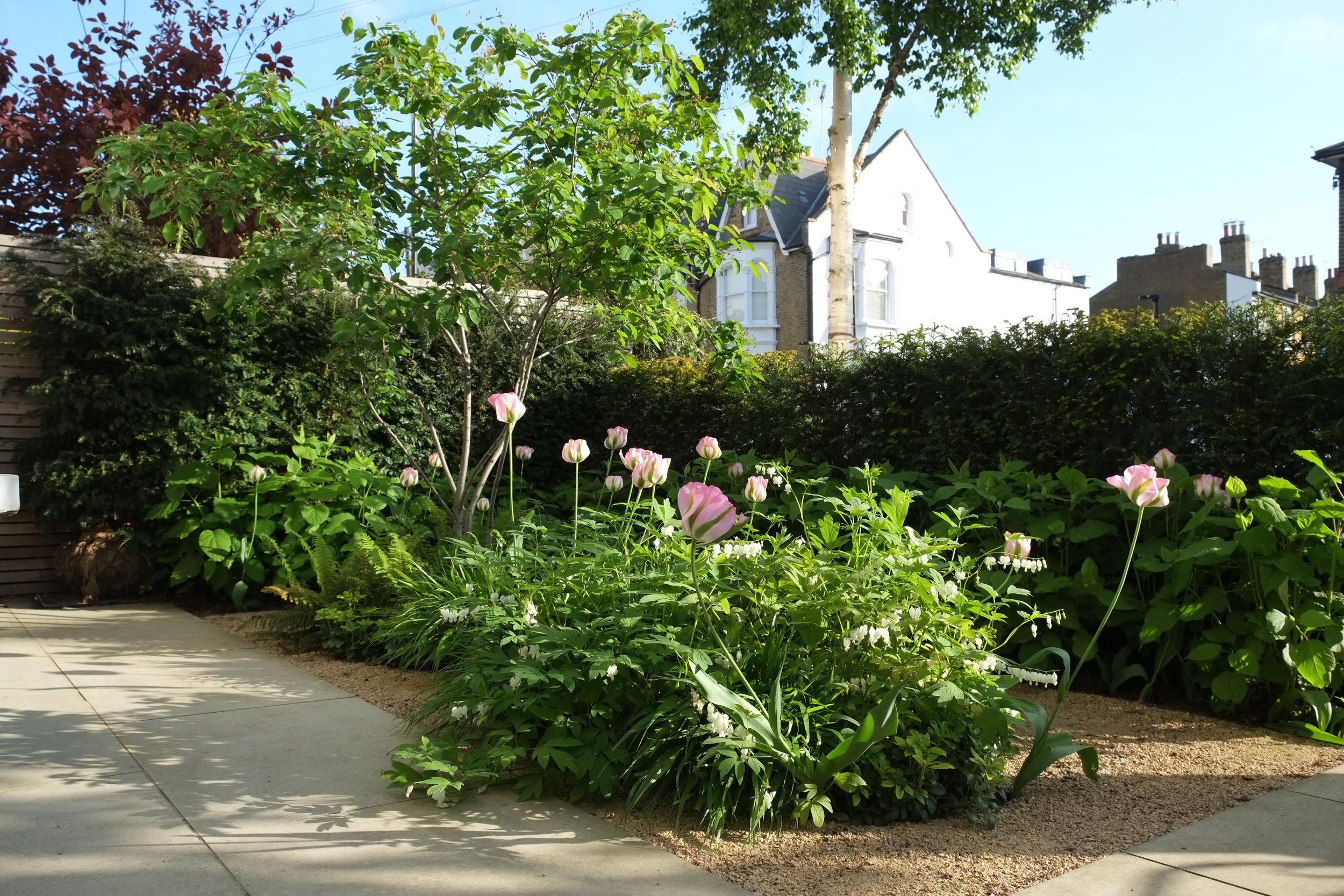 Yerbury Road, Front Garden