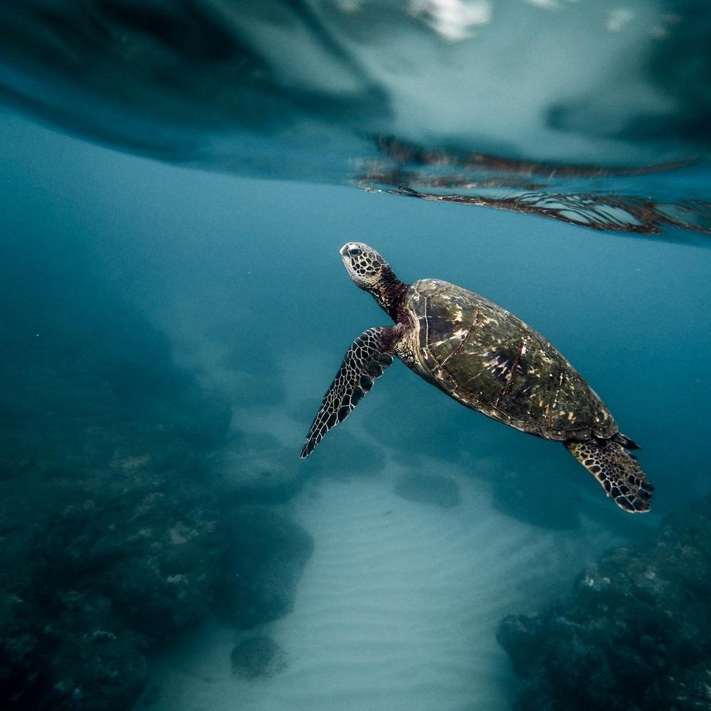 SEA TURTLES -