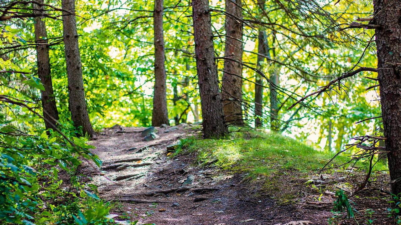 nature-3767411_1280.jpg