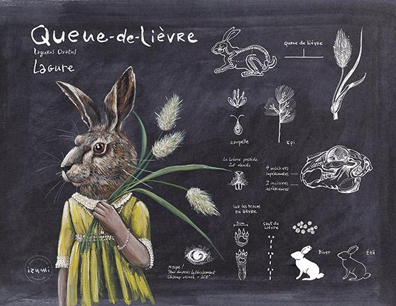 izumi_bestiaire_botanique_QUEUE_DE_LIEVRE_web.jpg