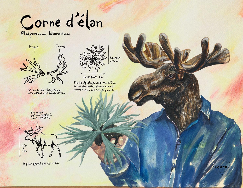 corne-d'élan_15X10.jpg