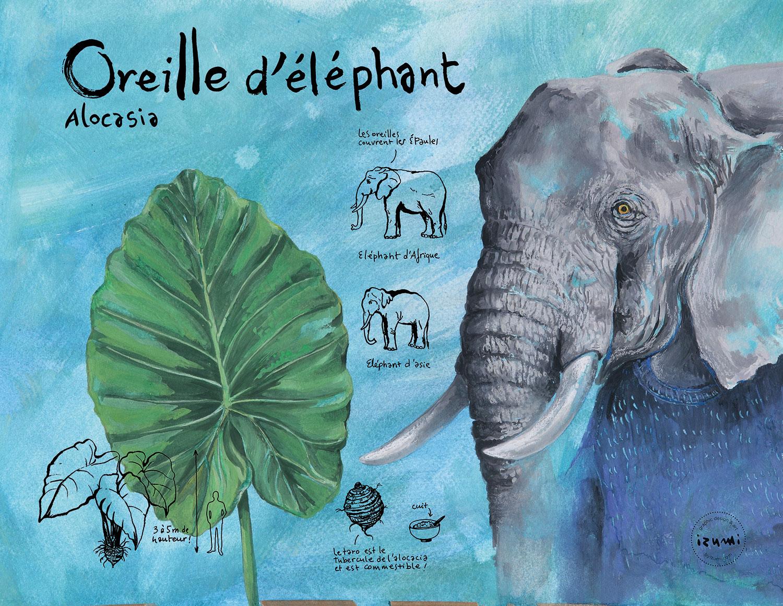 oreille-d'éléphant_15X10.jpg