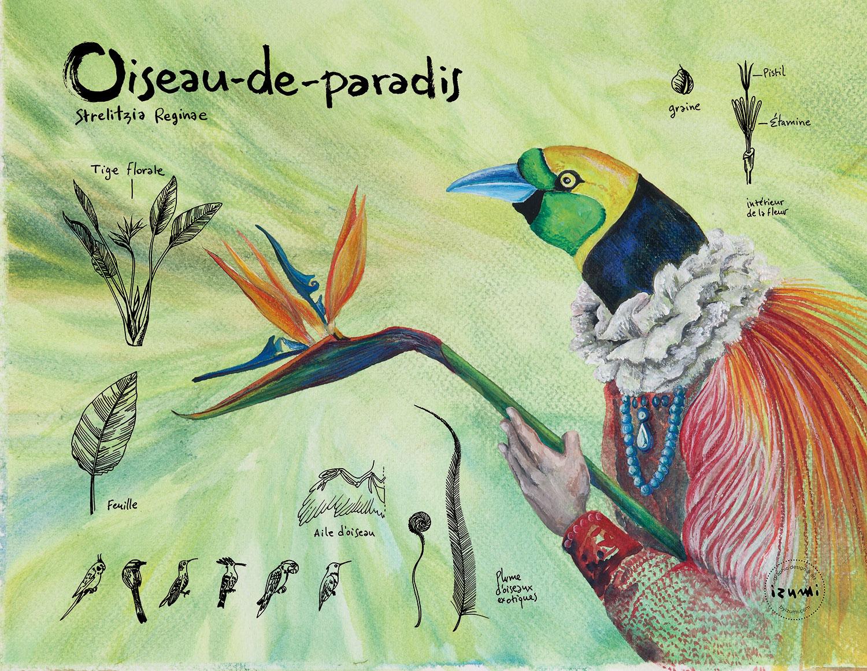 oiseau-paradis_15X10.jpg