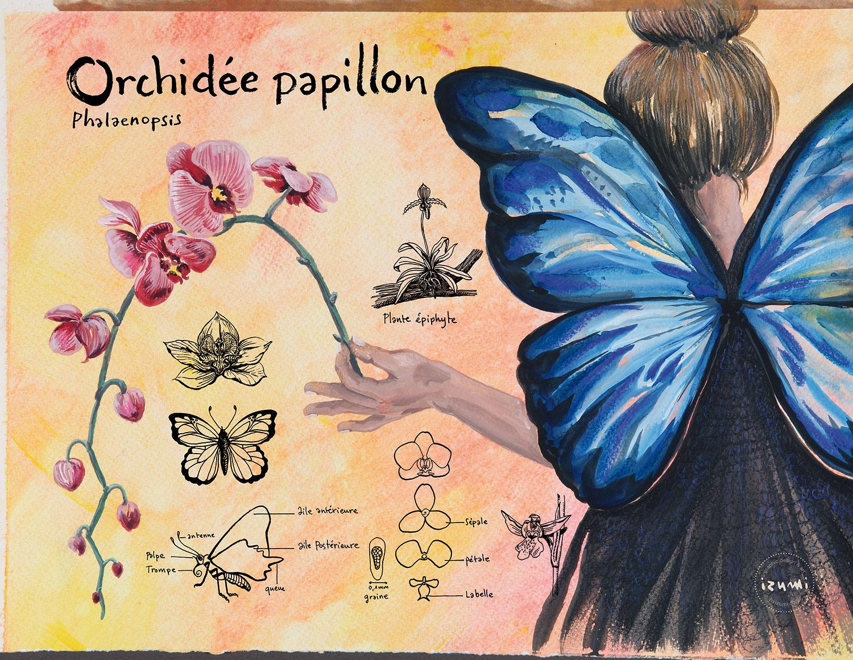 papillon_15X10.jpg