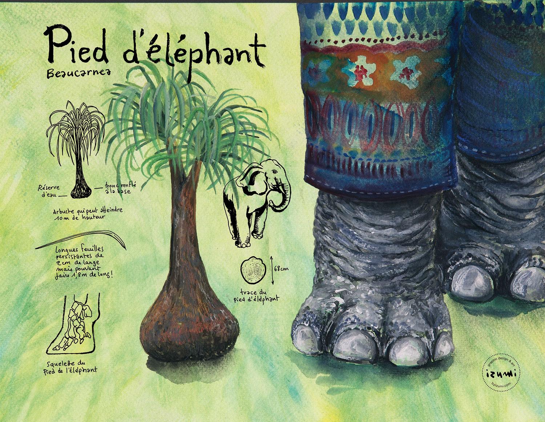 pied-d'éléphant_15X10.jpg