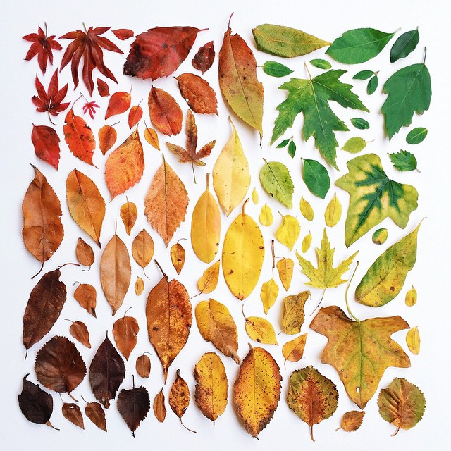 Leaves Arrangement, Emily Blincoe