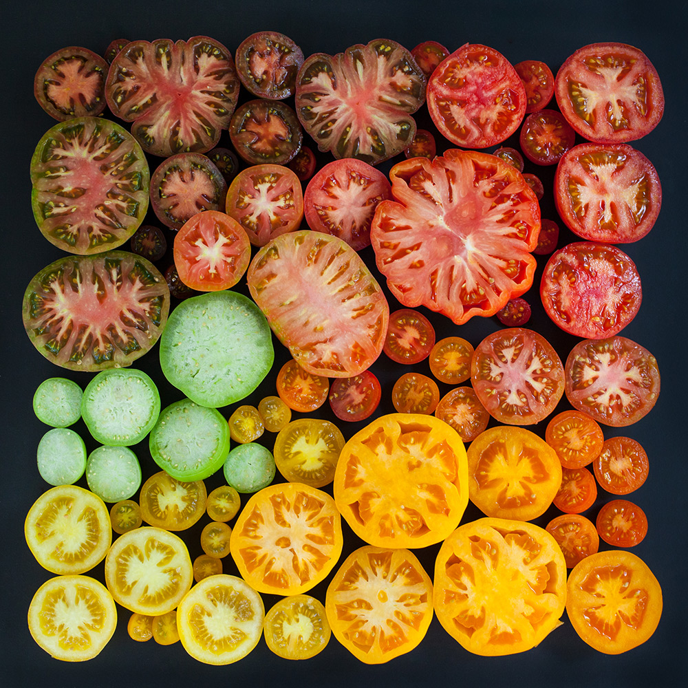 Tomatoes Arrangement, Emily Blincoe