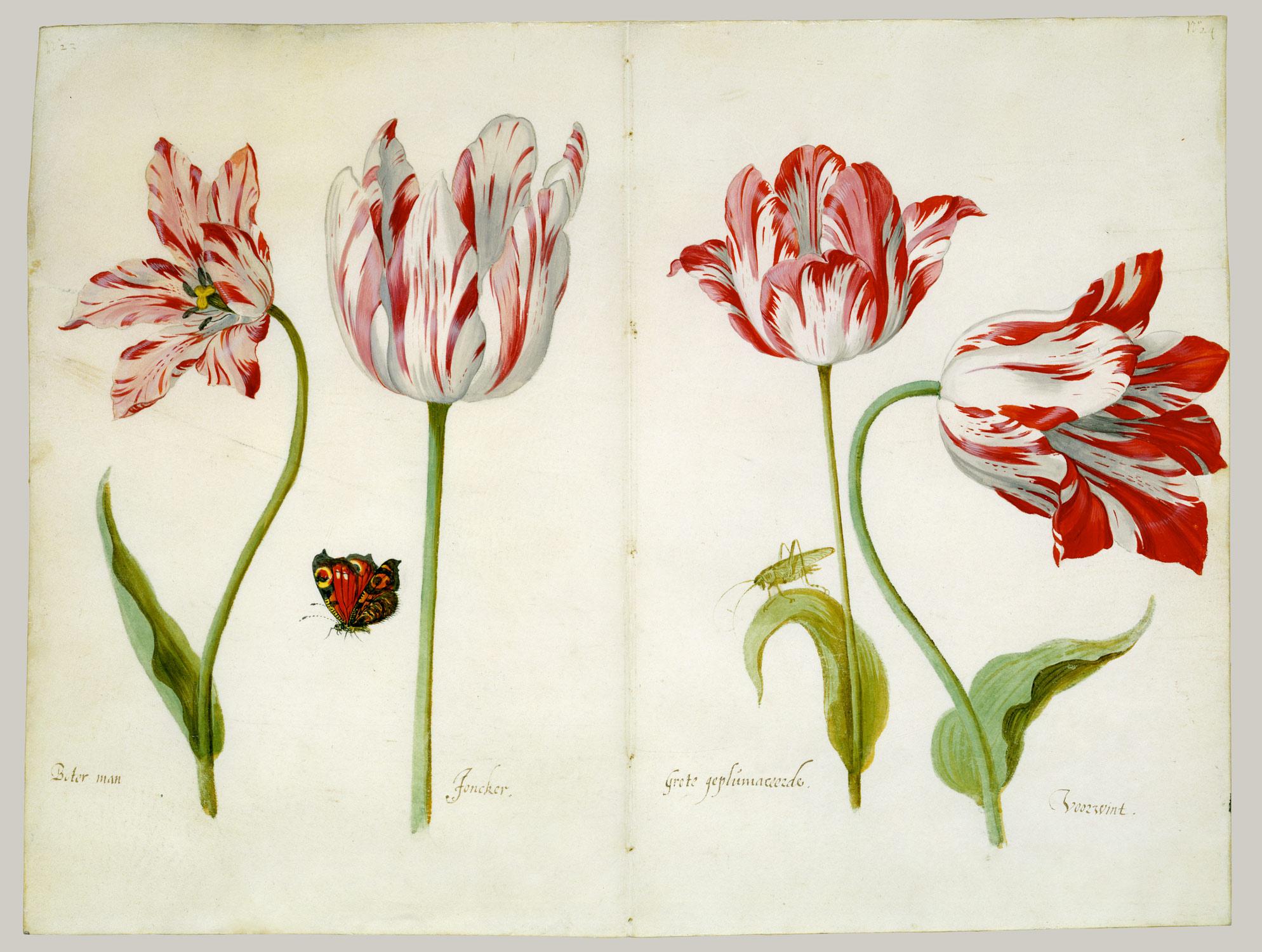 02 Tulip Blog.jpg