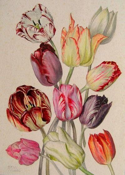 04 Tulip Blog.jpg