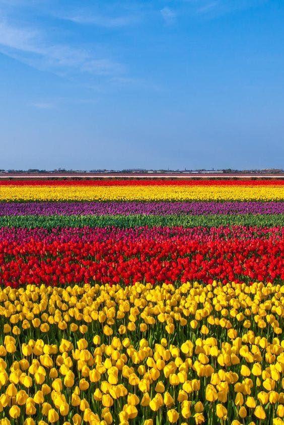 05 Tulip Blog.jpg