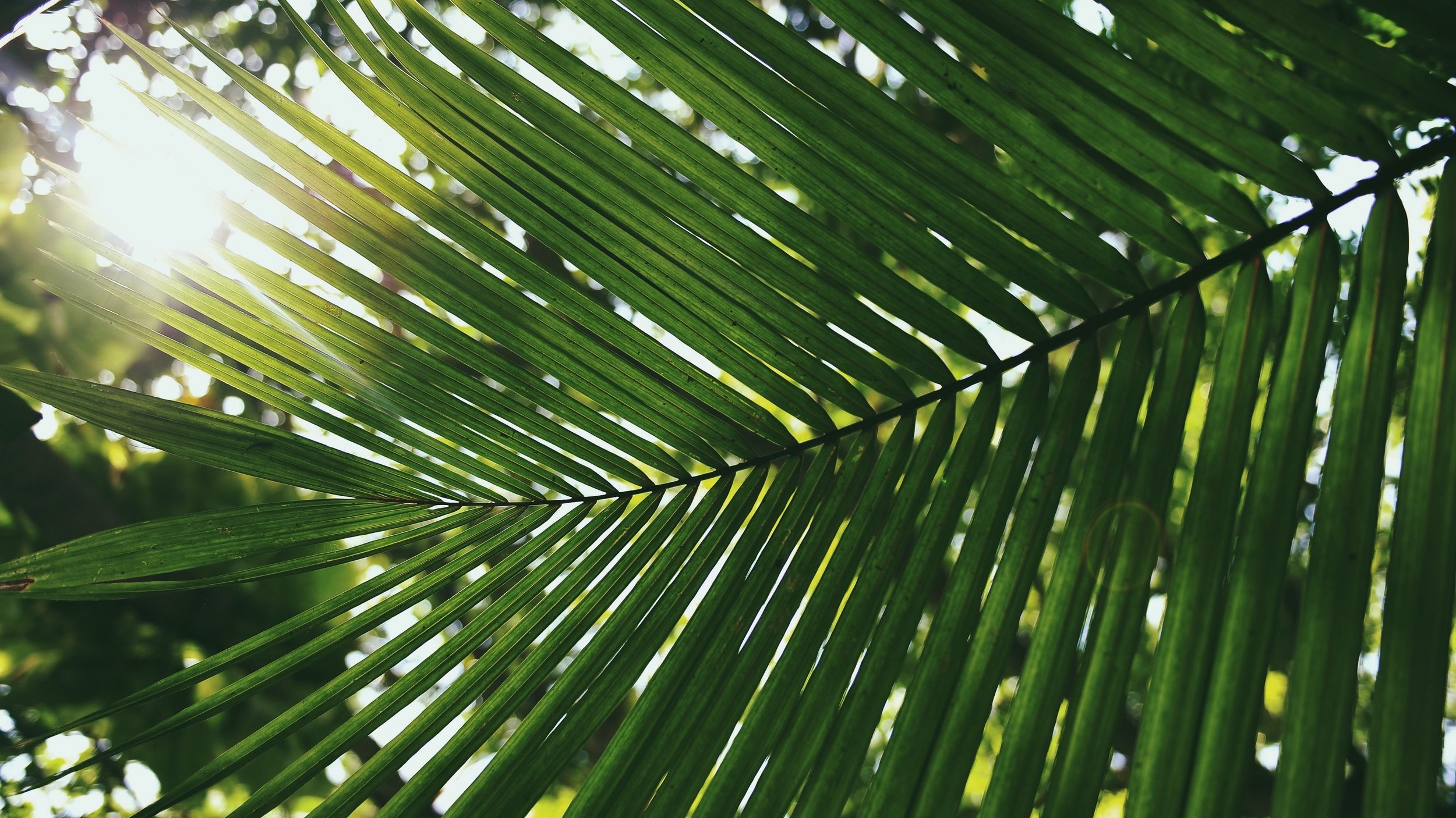 PASSION (PALM) SUNDAY -
