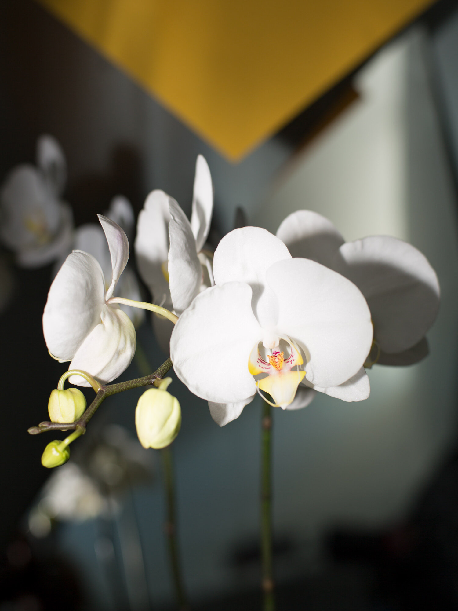 Orchid_in_yellow_web.jpg