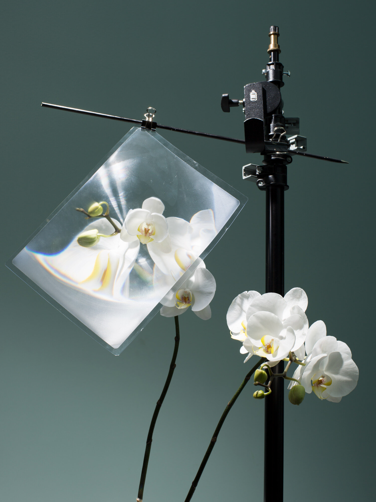 Orchid_Lens_web.jpg