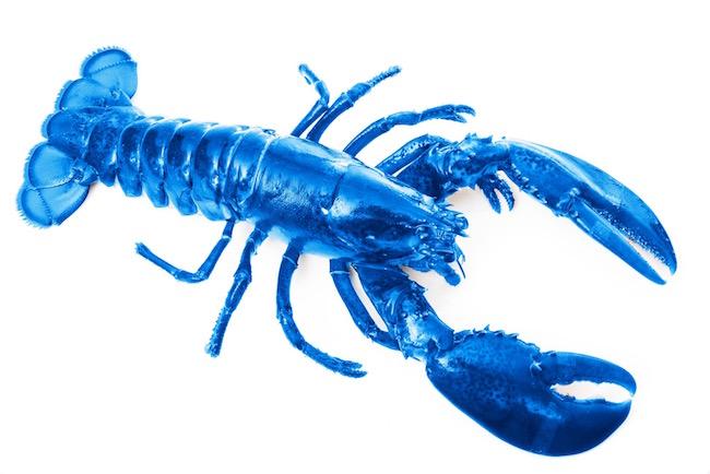 Onepixel_30654-Lobster.jpg