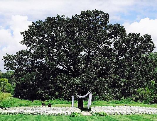 'Neath the oak's bough.