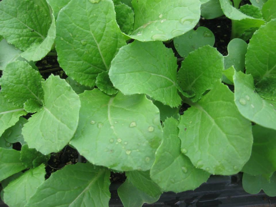 Organically Grown Seasonal Vegetables