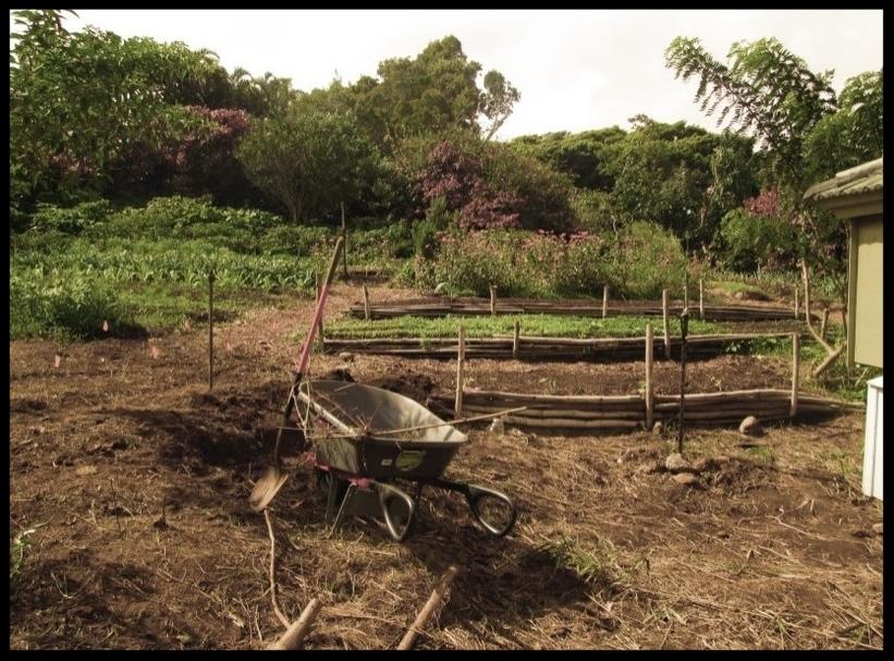Mana Garden. Filter process images.smallerfile.jpg